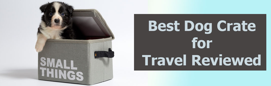 Best Dog Crate for Travel Reviewed