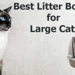 Best Litter Boxes for Large Cats