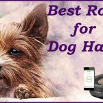 Best Roomba for Dog Hair