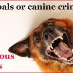 Top 10 Dangerous Canines
