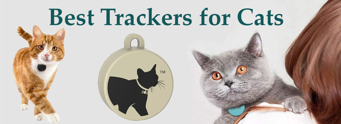 Best Trackers for Cats