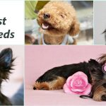 Top 5 Smallest Dog Breeds