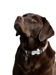 11 dog beds for Labradors Retrievers