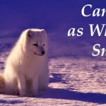 Canines as White as Snow
