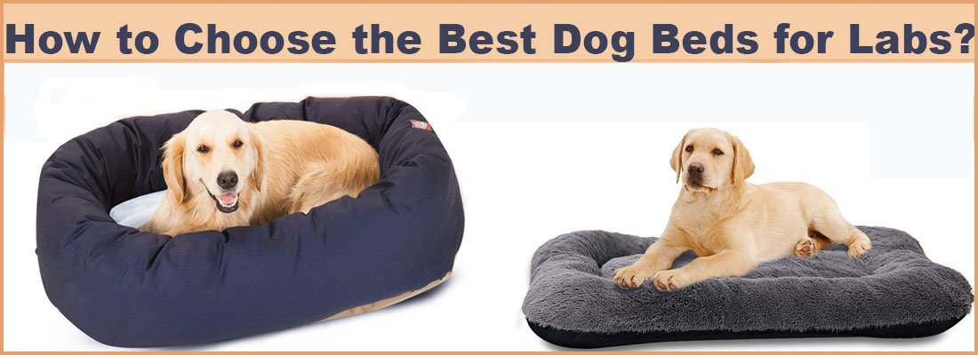 How to Choose the Best Dog Beds for Labs