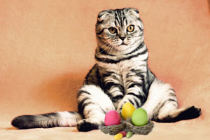 Eggs for cats