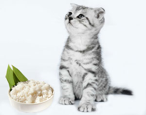 Rice and cat