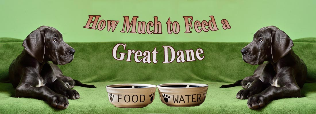 Feed a Great Dane