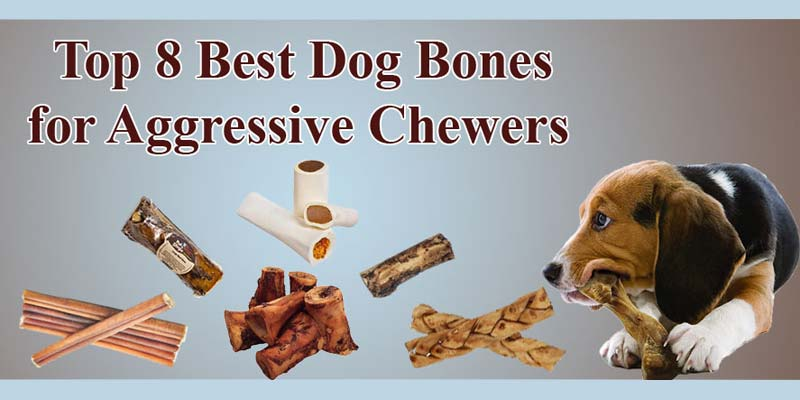 Top 8 Best Dog Bones for Aggressive Chewers