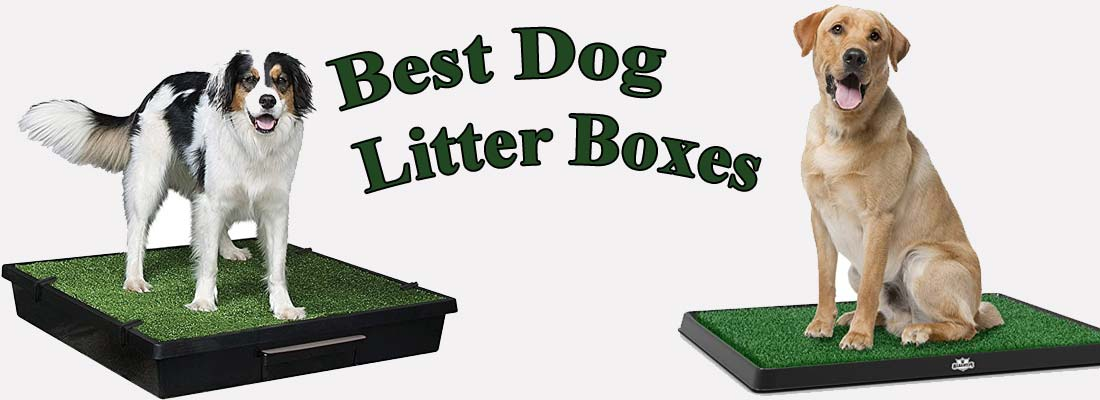 best dog litter boxes