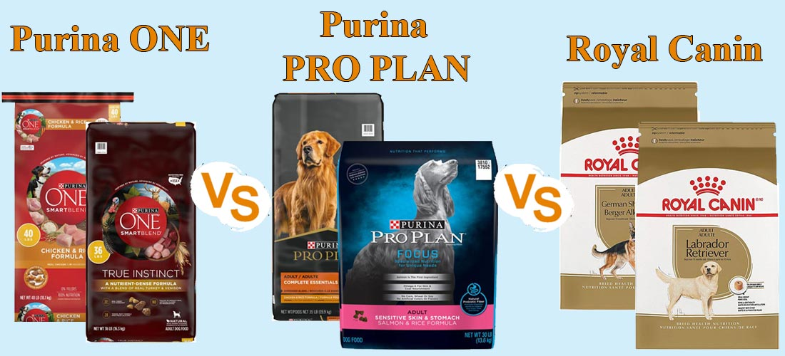 Purina ONE vs. Purina PRO PLAN Vs. Royal Canin