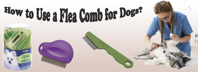 How to Use a Flea Comb for Dogs